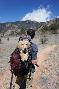 Whatever you need it for, you will find a backpack made for it. Even one to carry your do in!